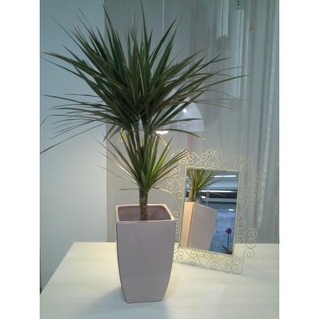 Planta de interior.