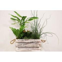 Caja  de madera con plantas variadas