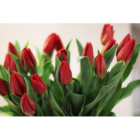 Ramo de tulipanes en saco de yute