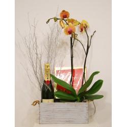 Caja con orquídea , champagne, y bombones